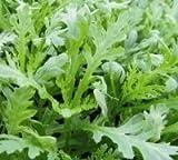 JustSeed Saatgut, Kronenwucherblume/ Chrysanthemum coronarium, 1.000 Samen