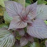 garden supplies bonsai Perilla seed edible Purple leaf Sue Perilla seed 50 seeds/pack
