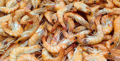 getrocknete Shrimps
