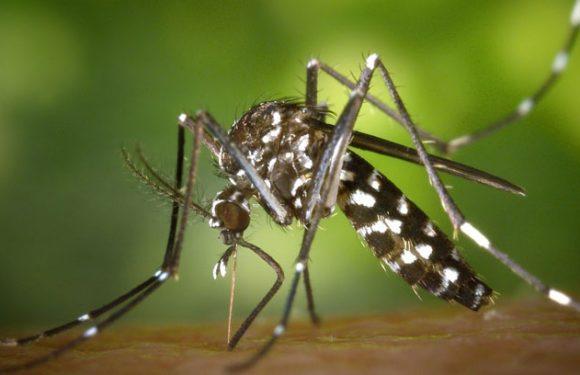 Mückenschutz als Patches – so werden sie hergestellt