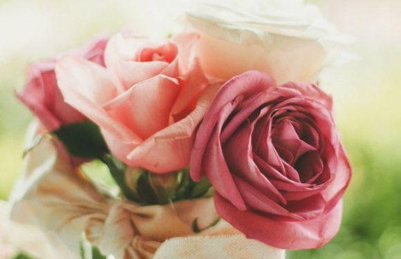 Rosenwasser in Koreanischer Kosmetik