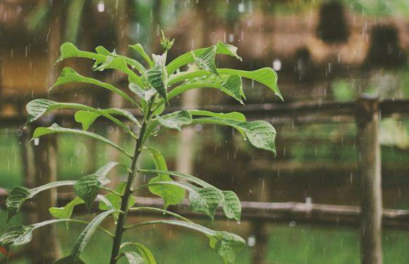 Starker Monsunregen herrscht bis zumindest Mittwoch vor